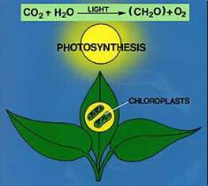 wat betekent fotosynthese